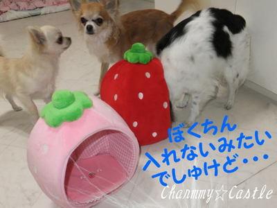 2012.01.09-.jpg