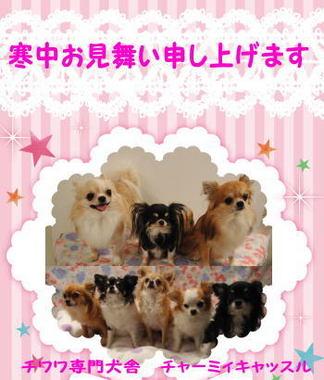 2012.01.10-1.jpg